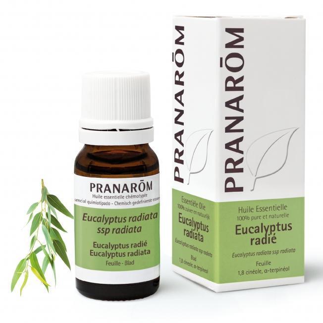Pranarom – BIO Eterično olje Evkalipt radiata (Eucalyptus radiata), 10 mL